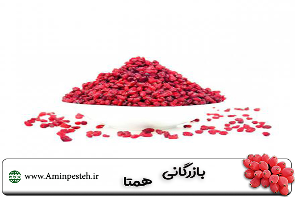 خرید زرشک در تهران