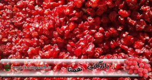 قیمت زرشک در شیراز