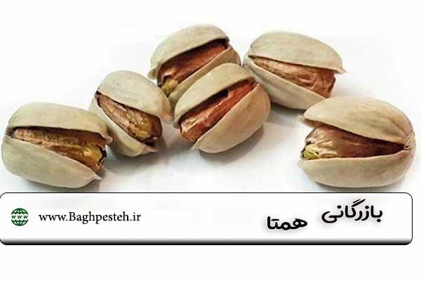 قیمت پسته اکبری در تهران