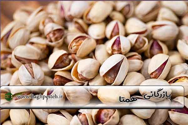 قیمت پسته رفسنجان 1400